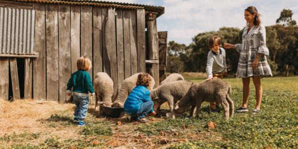 Animal Feeding